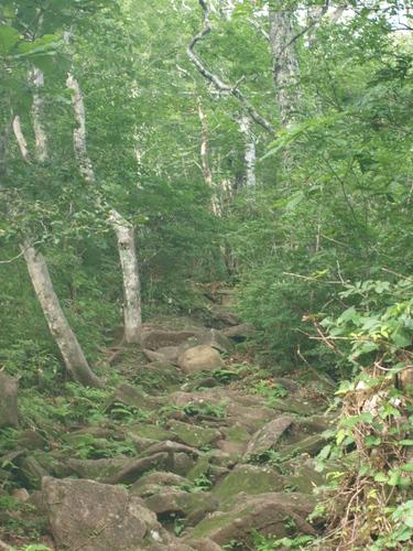 2009 08 16登山道.jpg