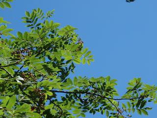 2009 08 25風景2.jpg