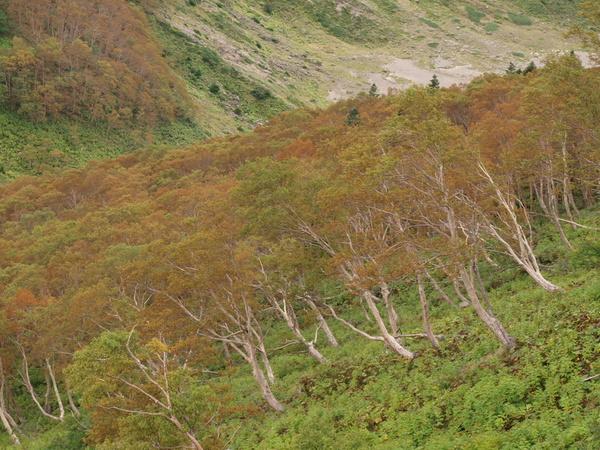 2009 09 06紅葉 (2).jpg