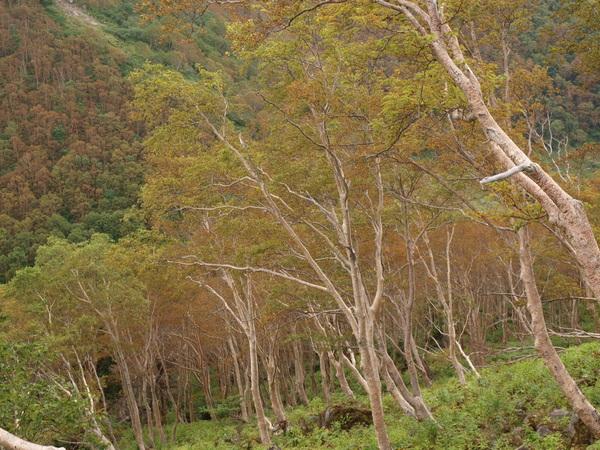 2009 09 06紅葉3.jpg