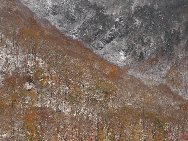 2009 11 03_6057.jpg