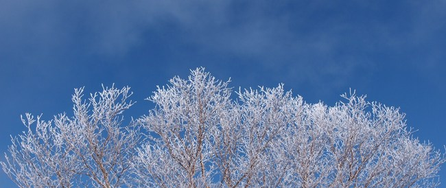 霧氷16416.jpg
