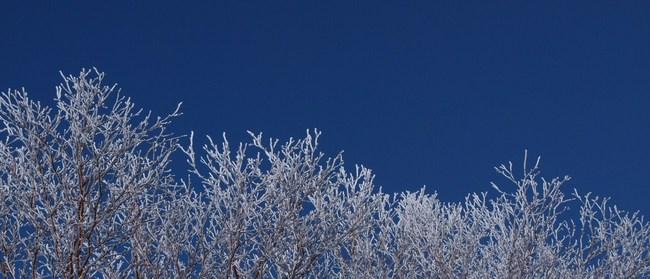霧氷26427.jpg
